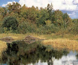 wetlands swamps and bogs image